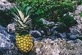 Grand Sirenis Riviera Maya Resort, Akumal, Mexico (Unsplash joxKHxjpjlw).jpg