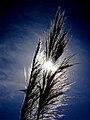 Grass Sky Sun.jpg