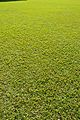 Grass Texture - Kolkata 2013-11-10 4455.JPG
