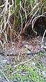 Grass unique outcome.jpg