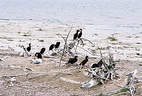 Gravel Island (6925145186).jpg
