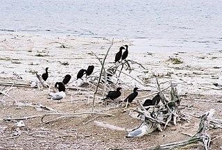 Gravel Island National Wildlife Refuge