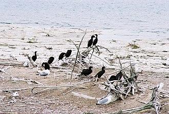 Gravel Island National Wildlife Refuge - Birds by the lakeside on Gravel Island.