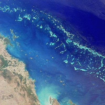 Assez Photo-guide naturaliste sous-marin de la grande barrière de corail  JC63