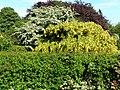 Green, Yellow, White and Bronze - geograph.org.uk - 183699.jpg