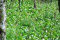 Grosses Torfmoor Birkenwald NW3.jpg
