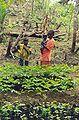 Guinea tree nursery.jpg