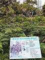 HK 中環 Central 遮打花園 Chater Garden flora green leaves n trees March 2020 SS2 31.jpg