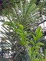 HK ML 香港半山區 Mid-levels 上亞厘畢道 Upper Albert Road flora green leaves April 2020 SS2 07.jpg