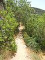 Hadassah trail 2.JPG