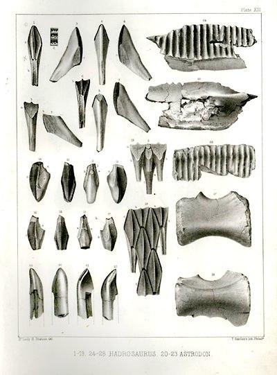 Hadrosaurus lithograph