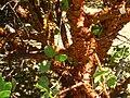 Hakone Gardens, Saratoga, CA - IMG 9144.JPG