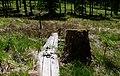 Hangmoor im Nationalpark Hunsrück-Hochwald 01.jpg