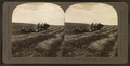 Harvesting in the great West, combined reaper and thresher, Washington, U.S.A, by Singley, B. L. (Benjamin Lloyd).png