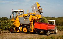 Colour photo showing a harvesting machine that empties its harvest in the yellow bucket into an orange trailer hitched to a tractor. It is white grapes flowing from one of the buckets. The grass around the vines is high and yellowed by drought but the vines are still green, although showing some yellowing, a sign of change from summer to autumn.
