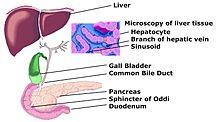 Acute liver failure - Wikipedia