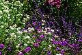 Herbaceous border, Pool Meadow - Flickr - peganum (4).jpg