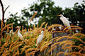 Heron white.jpg