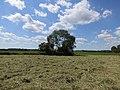 Heuernte - panoramio (3).jpg