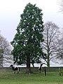 High Park - geograph.org.uk - 299031.jpg