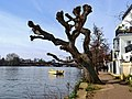 High Tide on the Thames at Strand on the Green (No.1) - panoramio.jpg