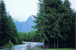 Strathcona Provincial Park - Highway 28 in Strathcona Park