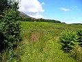 Hillside with bracken - geograph.org.uk - 846315.jpg
