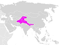 Himalayan brown bear area.jpg