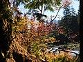 Hoh river fall foliage forest cbubar 2014 (22452853873).jpg