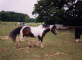 Horse, Wirral - scan01.png