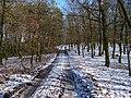 Housina, hřebenová cesta.jpg