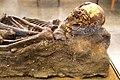 Human skeleton (Rockefeller Museum).jpg