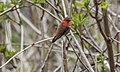 Humming Bird 168 (33693525963).jpg