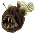 12 / Anglerfish