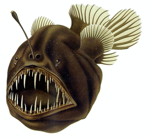 "Aggressive mimicry - The humpback anglerfish uses a modified dorsal spine as a bioluminescent ""fishing rod"" to capture prey."