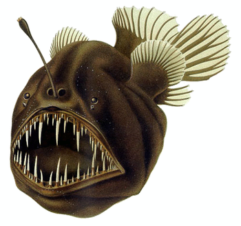 The Humpback anglerfish uses a modified dorsal...