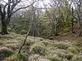 Ibarakawacho, Higashiomi, Shiga Prefecture 527-0216, Japan - panoramio (31).jpg