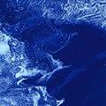 Ice Stars (5182693640).jpg