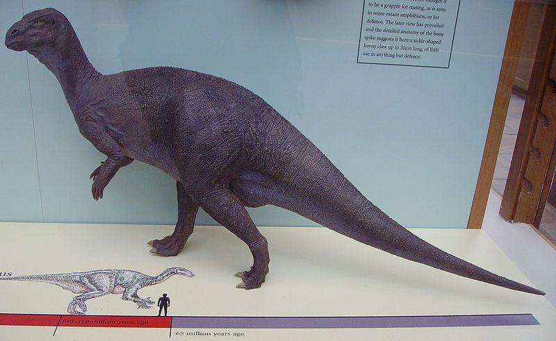 File:Iguanodon model.JPG