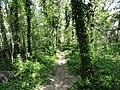 Il sentiero lungo il Santerno - panoramio.jpg