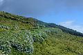 Ilha do Corvo Açores, paisagens, 3, Arquivo de Villa Maria, ilha Terceira, Açores.JPG