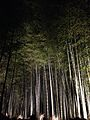 Illuminated Sagano bamboo forest 10.jpg