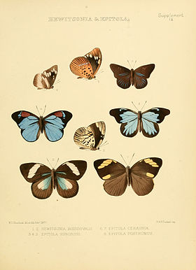 Illustrations of diurnal Lepidoptera Supplement Ia.jpg
