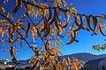 In Ely, Nevada (8124295566).jpg