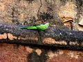 India-0179 - Flickr - archer10 (Dennis).jpg