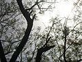 India-Qutb-Treelight.jpg
