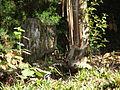 Indian Scimitar Babbler (Pomatorhinus horsfieldii).jpg