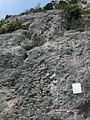 Inici via ferrada Roques de l'Empalomar, Vallcebre (juny 2011) - panoramio.jpg
