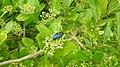 Insects Wasp from Madayipara DSCN2107.jpg