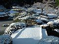 Japanese Garden (15426155153).jpg